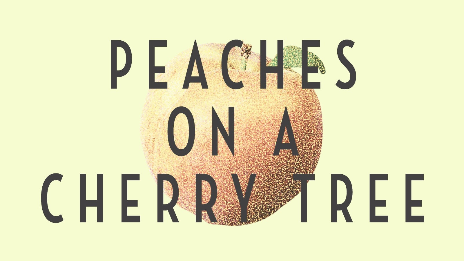 Peaches On A Cherry Tree