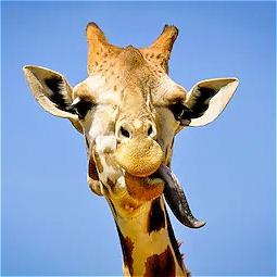 Giraffe Apocalypse